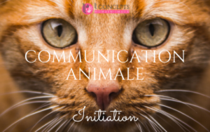 Communication Animale Initiation